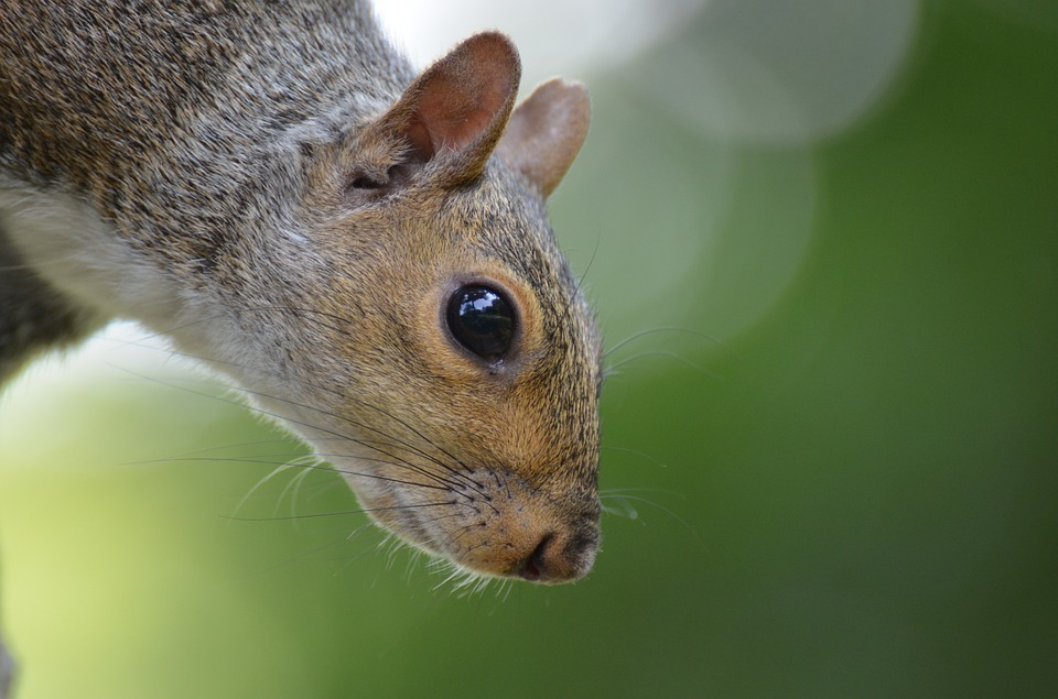 squirrel-in the Central Park.jpg