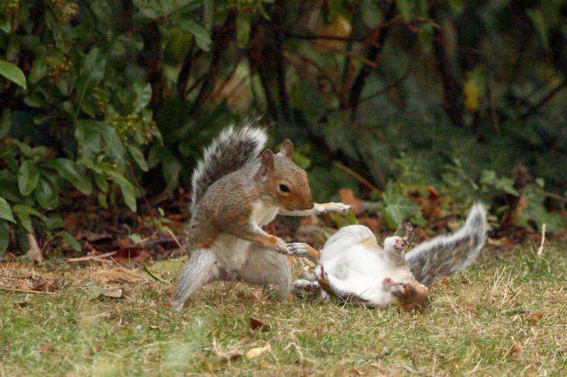squirrel battle1.jpg