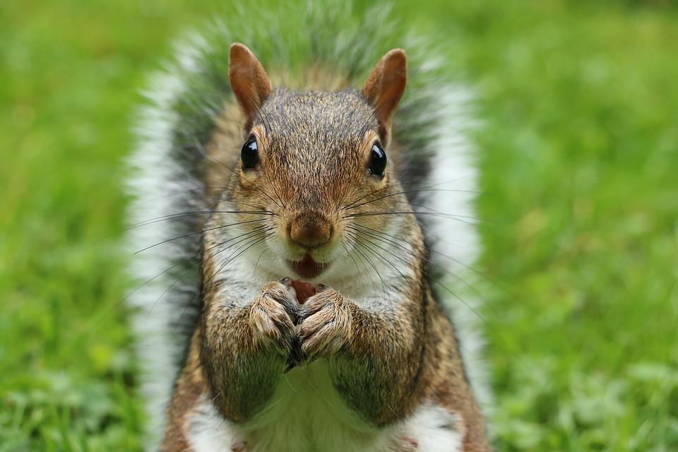 squirrel eating nuts.jpg