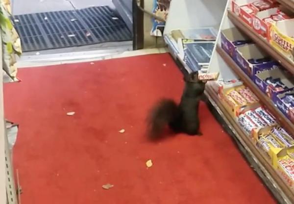 squirrel thieves.jpg
