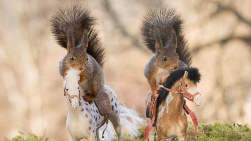 squirrels on teh horses.jpg