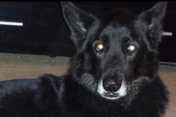 suspected wolf dog hybrid is just a dog.jpg