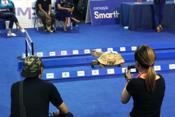 tortoise VS hare in Thailand.jpg