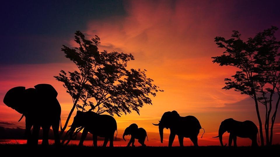 wild elephant.jpg